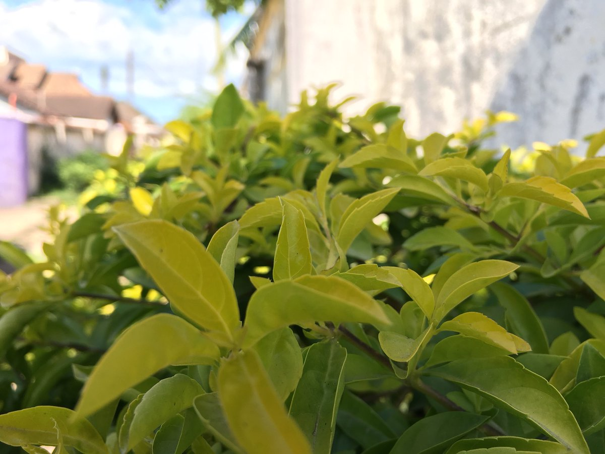 The beauty of nature #pichazasimu #plants #mazao #iphone6s