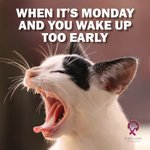 Image for the Tweet beginning: Mondays ... am I right?