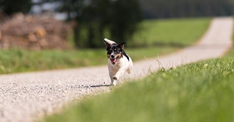 #expectthebest #movingtipmonday Http://www.sparefoot.com/self Storage /blog/20925 8 Ways Prevent Pets Escaping Getting Lost Moving Day/  U2026pic.twitter.com/ ...