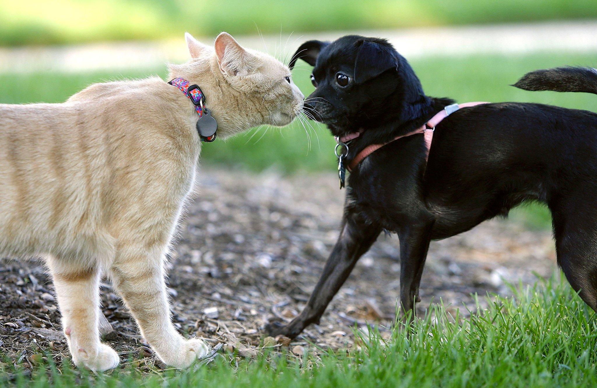 героиня собаки лучше чем кошки картинки слышала, всех