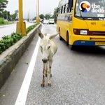 traffic Twitter Photo