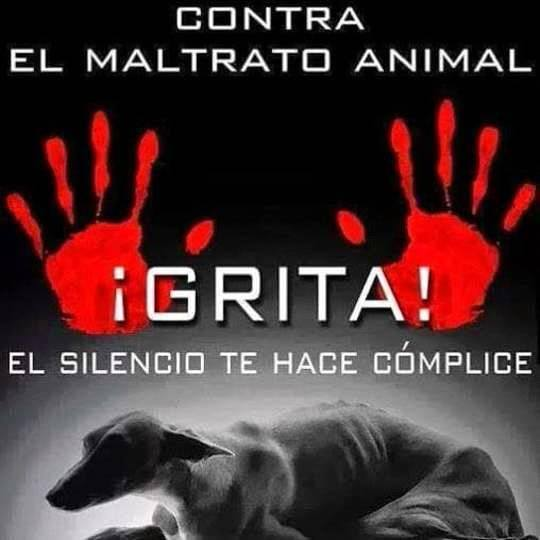 #Spain  #Sevillahoy @sanchezcastejon  @interiorgob  @maximhuerta  @CasaReal  In a statement, the Civil Guard has stressed that this action has saved the lives of two #galgos despite their state of neglect, malnutrition, muscular atrophy and obvious insalubrity #stopgalgueros<br>http://pic.twitter.com/ZdubYGpPjj