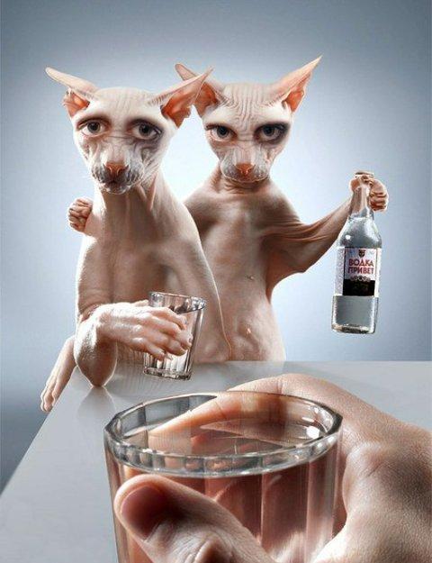 Рисунки пиве, открытки с днем рождения с кошками сфинксами