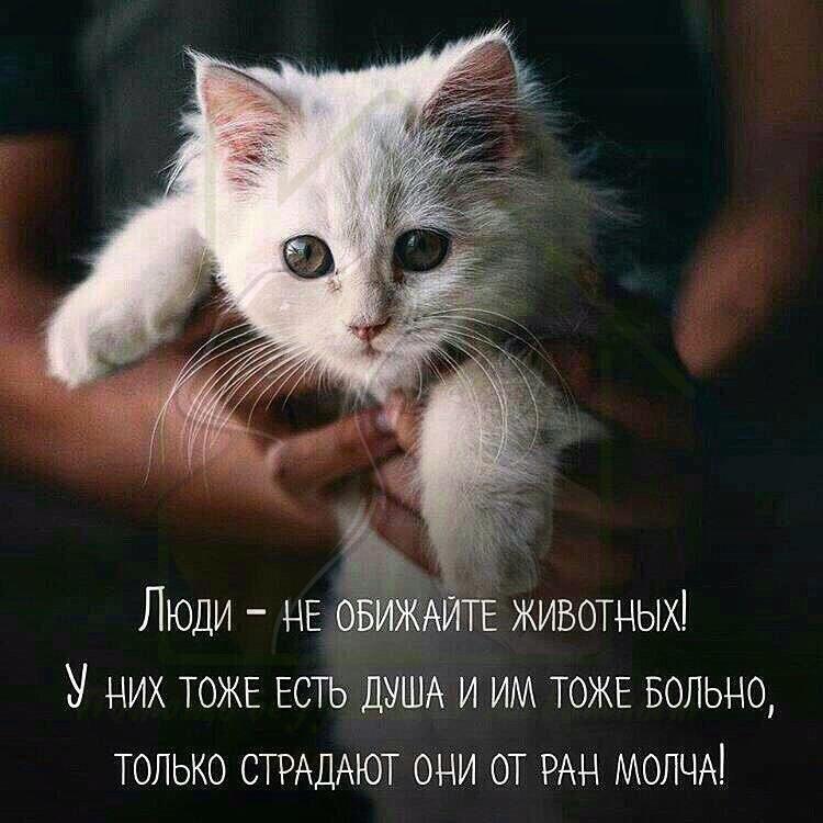 Картинки про любовь к животным с надписями