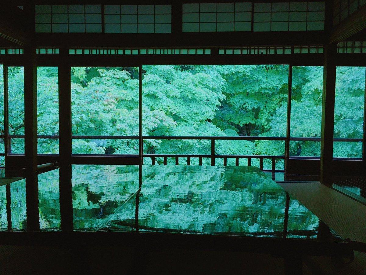 雨に濡れて、色の深みを増した緑を「濡葉色」とも言うそうで。  雫する青もみじに囲まれ、 静かな雨音が響き渡る。   京都・八瀬大原の瑠璃光院より。
