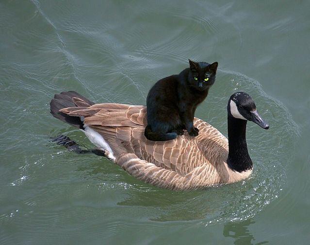 黒猫の冒険