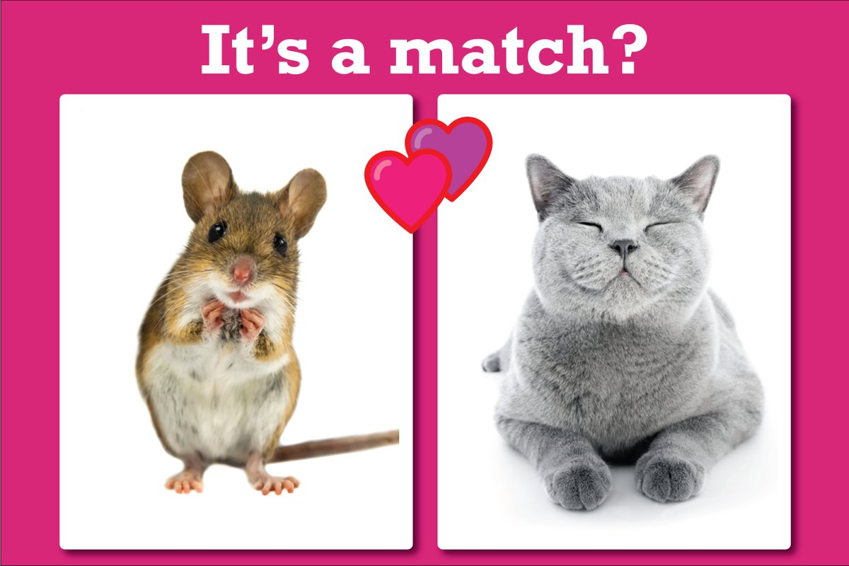 Cat and mouse dating