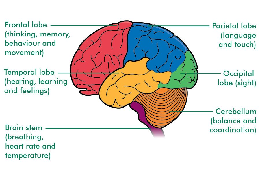 Mybraindr On Twitter Attached Is A Photo That Illustrates The