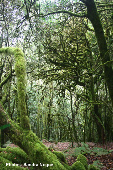1 #QUAPAL18 Good afternoon! We will tweet about quantifying how much of #pollen assemblage could be attributed to #traits, environmental and climatic conditions #Laurel forest of La Gomera and Tenerife (@nogue_sandra, @islandpaleco, @LauraJaneGraham and others!)<br>http://pic.twitter.com/v63v9UhMR0