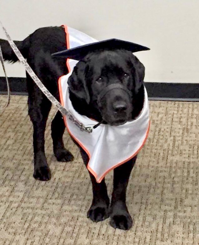 Service Dogs Of Va On Twitter Dante Got His Own Cap And Gown At