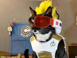 'IT'S OVER, 9,000!!' You guys love cats! Thanks for Liking the Beerus kitty over 9,000 times. :)