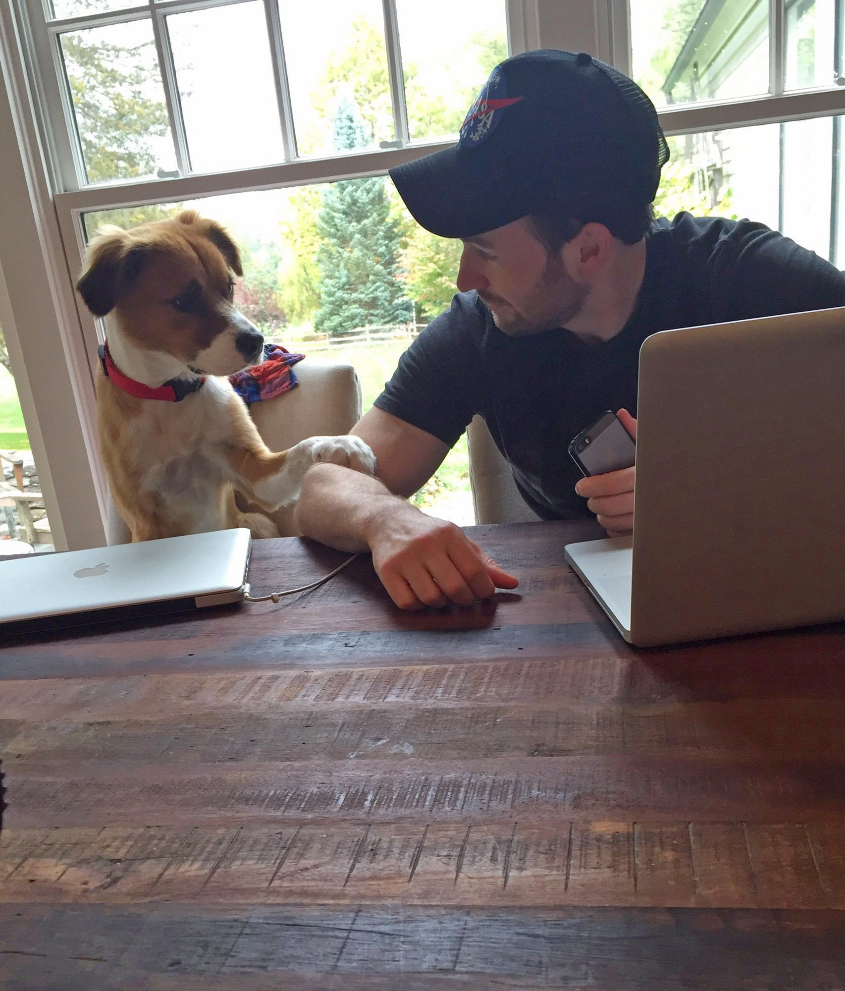 In honor of his birthday, a @ChrisEvans and his dog appreciation post to ✨�� bless your timeline ��✨ today. �� https://t.co/LWNWEW3Zqz