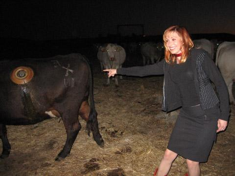 These photos are from the time @grantimahara and I visited a farming college and met a research cow with a stomach window so you could study the digestion process. They said the cow doesn't notice it. Look at my awkward smile! -- @KariByron
