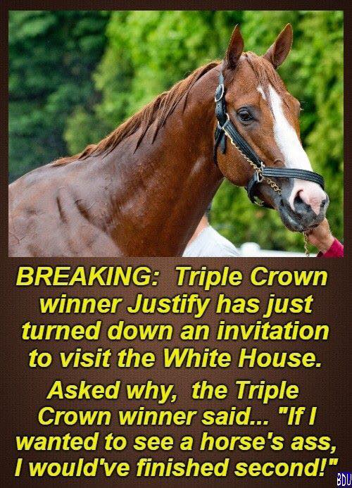 Image result for triple crown winner justify has just turned down