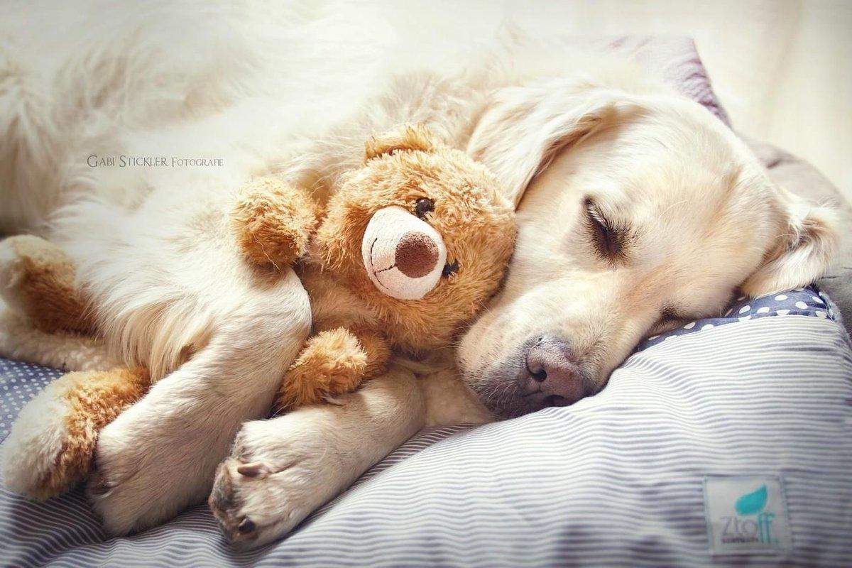 картинки сладкий сон собаки эпоху