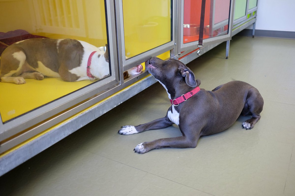 Every day is #GalentinesDay for Gina and Mystique! These ladies met for the first time at our Northeast adoption center and have had a blast goofing off together. Either one of these playful gals would make a wonderful addition to an active home!   http:// phillypaws.org/adopt  &nbsp;  <br>http://pic.twitter.com/T8utoS5R3B