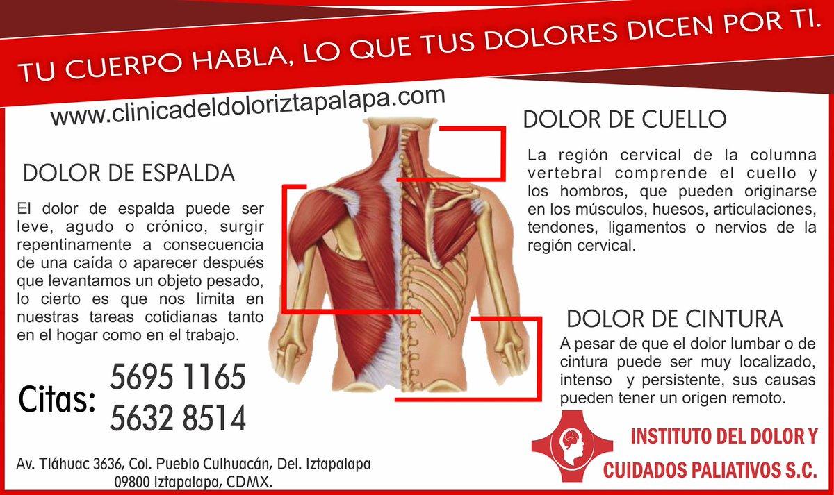 Increíble Músculo Del Hombro Modelo - Anatomía de Las Imágenesdel ...