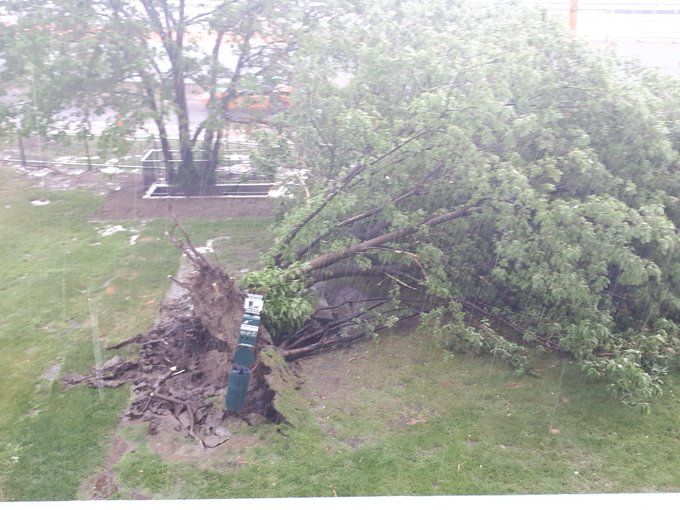 @CityNews #onstorm the tree in front of my apartment uprooted by high winds Photo