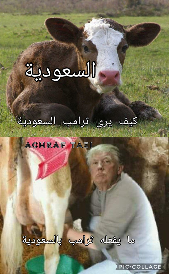 achraf tazi 🇲🇦's photo on #كاس_العالم_2026