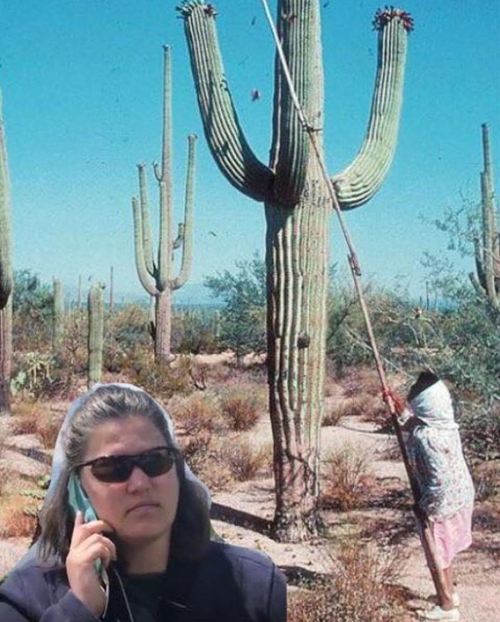When O'odham families are out in Saguaro National Park gathering bahdaj this summer.