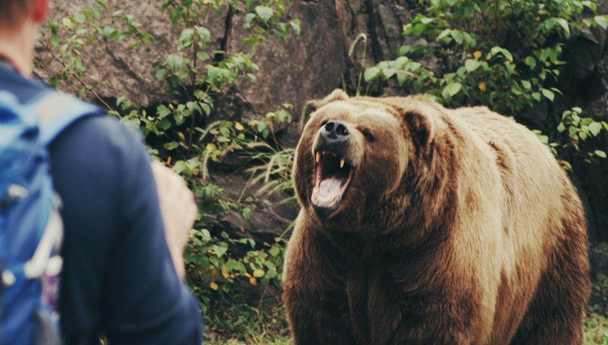 grizzly bear attacks - HD1920×1091