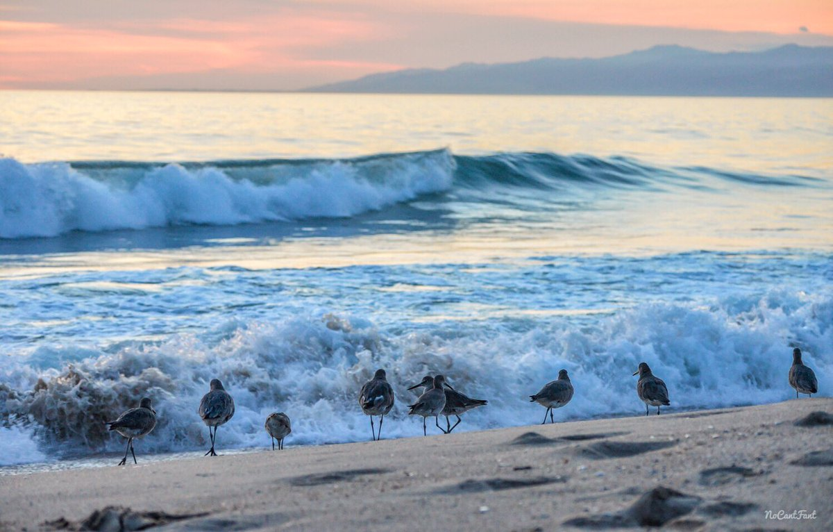 *Ain't Nobody F'in With My Clique*Create Your World! Birds always be rolling in deep and they know where the party at! Bottomless views and plenty of food shiiii we be all night #beachlife |FaDuK iT| #nocantlifestyle #nocantfant .....#sunset #beach #california #la #waves<br>http://pic.twitter.com/vlxiiAXEs0