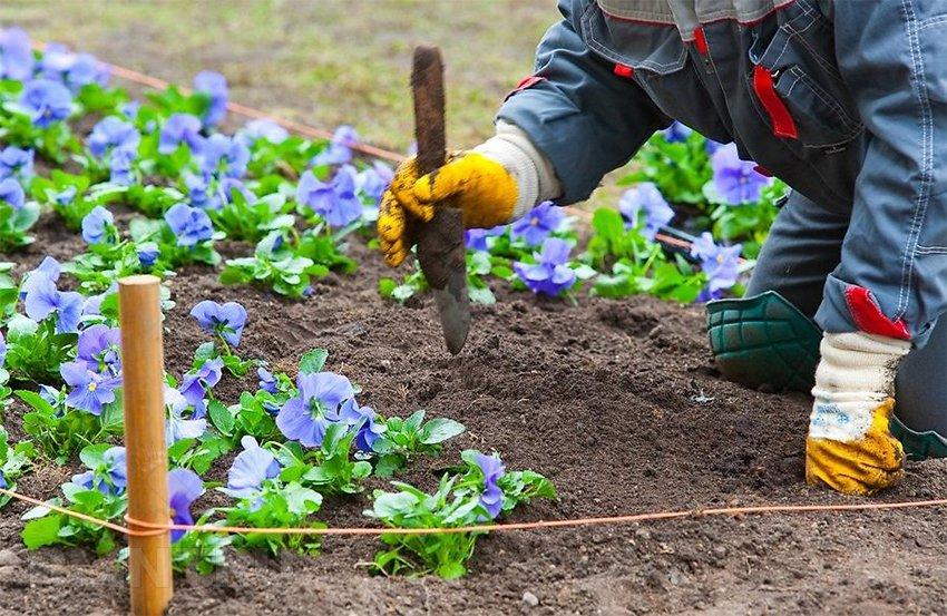 Картинки для детей работа в огороде весной высадка рассады, картинки день