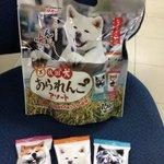 Image for the Tweet beginning: ロシアのフィギュアスケーターのザギトワ選手のもとに、秋田犬のマサルが贈られ盛り上がる秋田犬ブーム。 #秋田いなふく米菓  が、こんなあられを出しました!えび、いか、しょっつるの3つの味の小袋が。しょっつる味、うめーど〜(^◇^) #秋田犬あられんこアソート