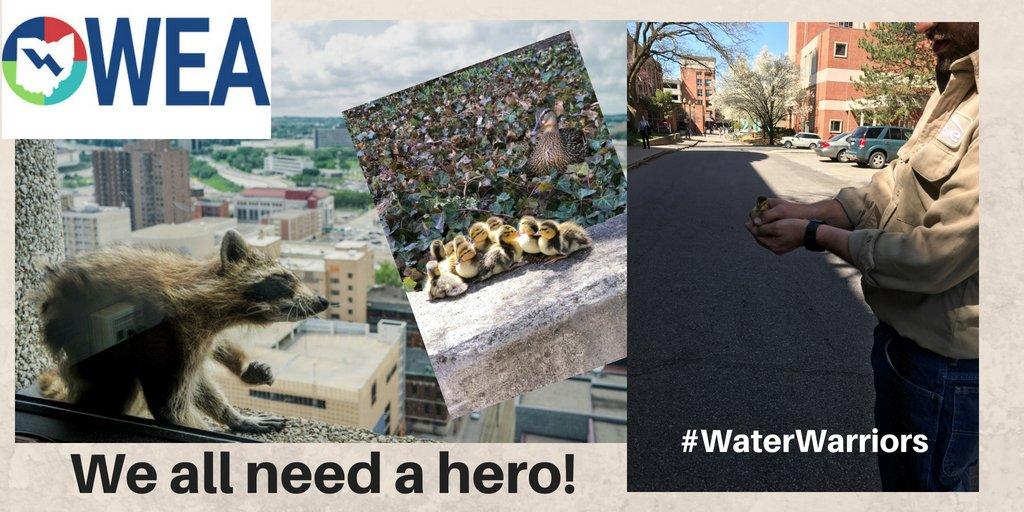 Ohio Water Env Assn's photo on #mprraccoon