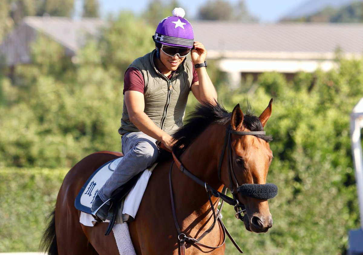 Here's your daily dose of Drizzy, handsome #calbred by #englishchannel  <br>http://pic.twitter.com/Y88H5SGDlm