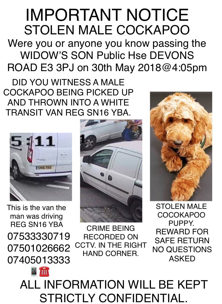 If you would PleaseRT Oscar is a puppy Stolen by a guy driving a white transit van registration SN16 YBA owners heartbroken @KateUpton @KatiePrice @katehop33 @KatieS #findstolenoscar<br>http://pic.twitter.com/FYvZdkn7Nf