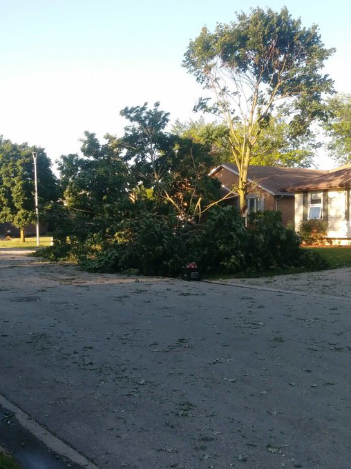 Tree damage in Norwich on Moore Crescent from yesterday's severe weather. Photos sent in by Natalie G. #onstorm Photo