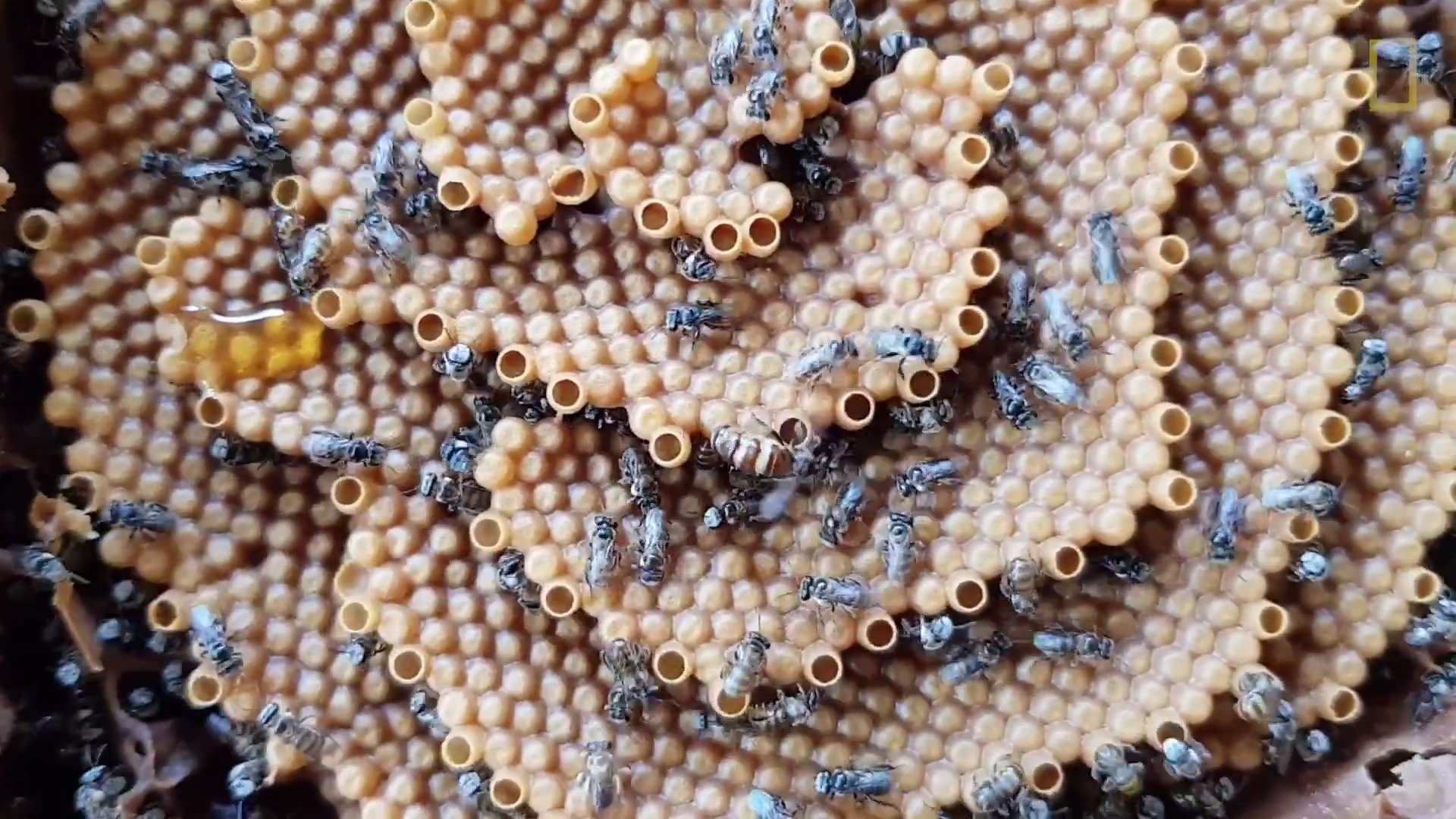 This is the only species of bees to build their hives upward, in a spiral https://t.co/dQsTOqT8kK