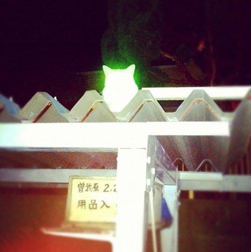 後藤羽矢子さんの投稿画像
