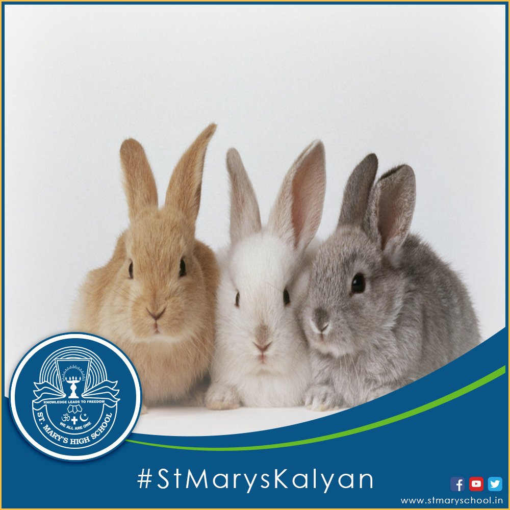 St Mary S School On Twitter Quiz True Or False Rabbits Are