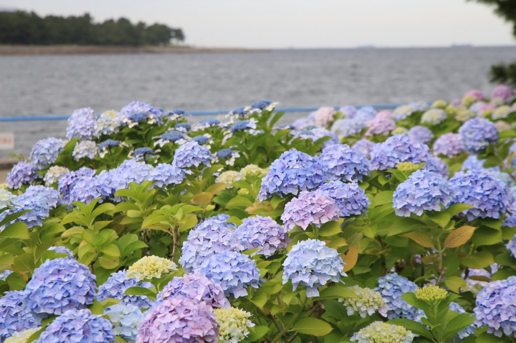 hamako_yokohama photo