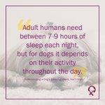 "Image for the Tweet beginning: Did you know? ""Adult humans"