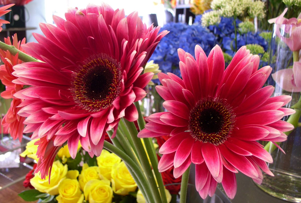 Funeral Flowers Funeralflorist Twitter