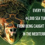 Image for the Tweet beginning: Just in time for #WorldSeaTurtleDay,