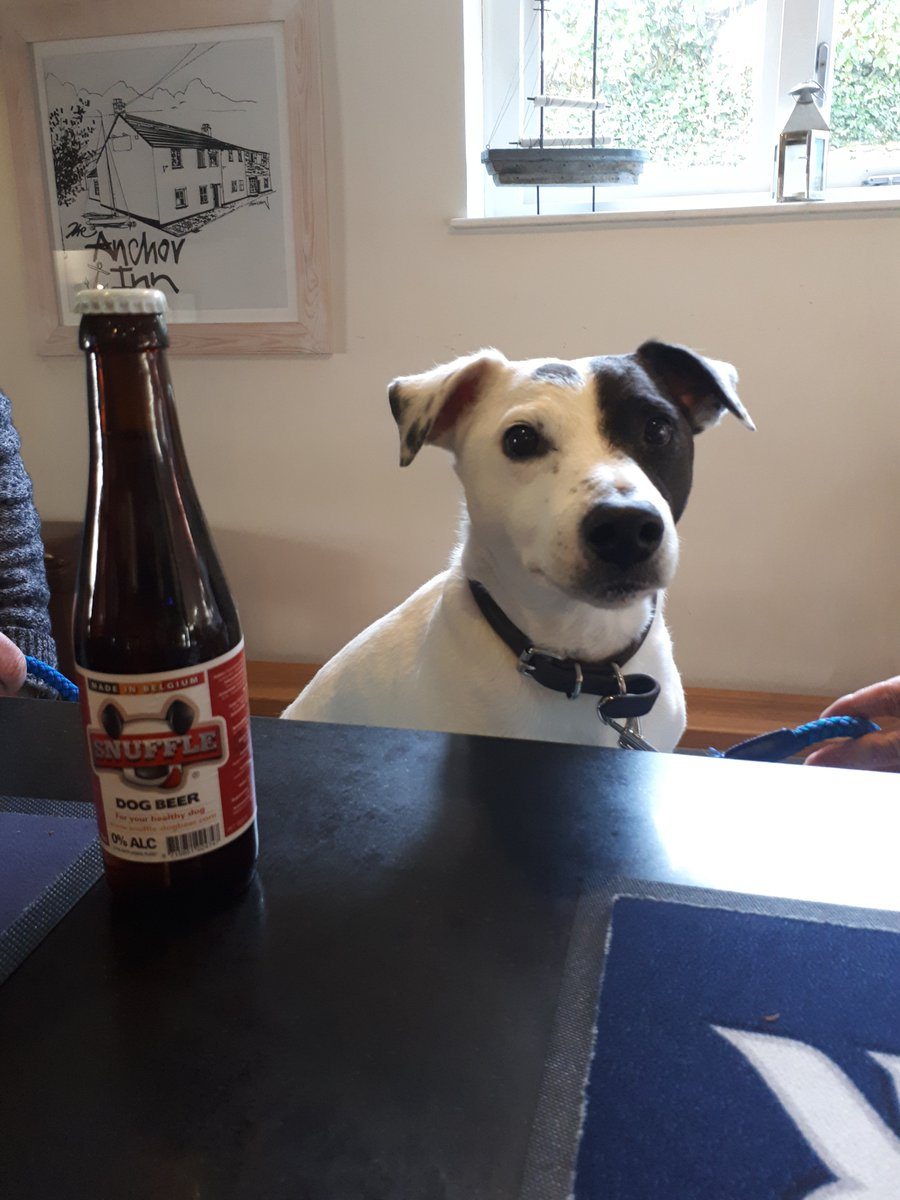 Got the #FridayFeeling but need to walk the #dogs ?  End your walk here and enjoy a pint of #Organic #CraftBeer from @ExeterBrewery while the dogs enjoy a @SnuffleDogBeer on #NationalBeerDay ! #Dartmoor #dogfriendly #pubs #CheersToBeer #beeroclock https://t.co/Zf8OHcS25S