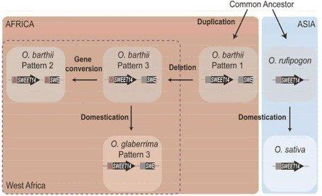pdf kommutative algebraische gruppen und ringe