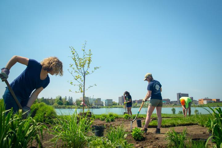 Planting of a wildflower garden near Lake LaSalle on North Campus