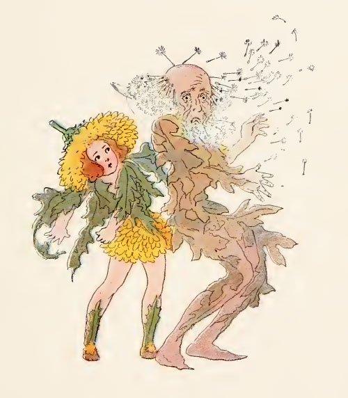 雑。美少女ばかりが花の擬人化ではありません。花咲くタンポポは若者で、綿毛状のそれは老人なのであります。風が吹くとハゲるわけです。息を吹きかけるとハゲるわけです。話の展開次第ではかなりモメそうな。絵はM.T.ロス。