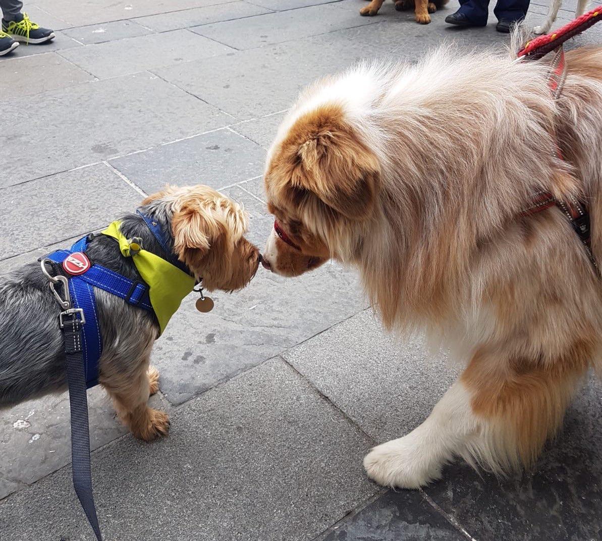 When a picture says a thousand words! #dogsontour #dogfriendlytours ♥️🐾