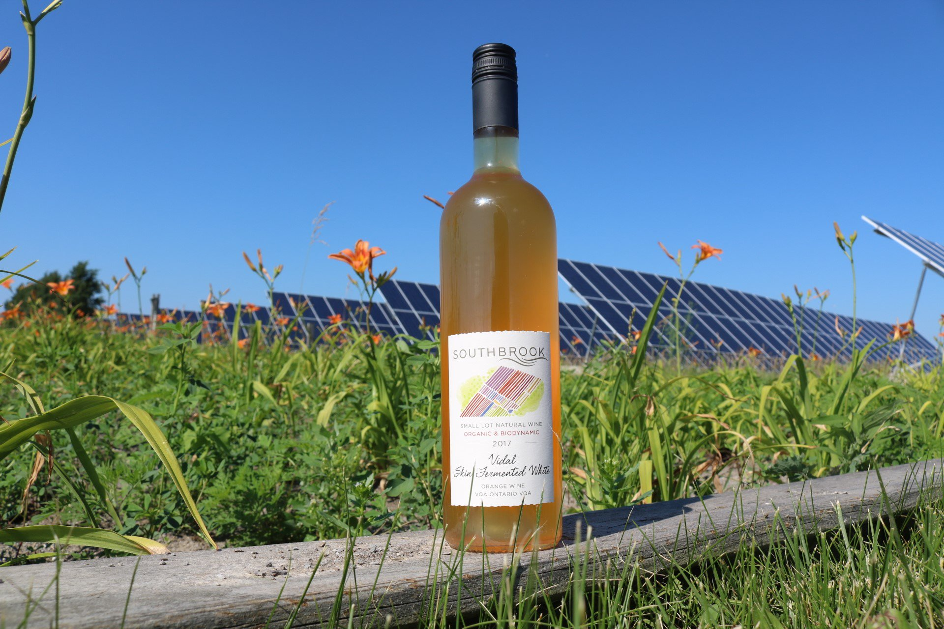 """Southbrook Vineyards on Twitter: """"Its going to be a HOT #LongWeekend ! Stay  cool with our new release of Orange Wine. Retails at $29.95, available  online or at the tasting bar https://t.co/Eft4bIwbaO…"""