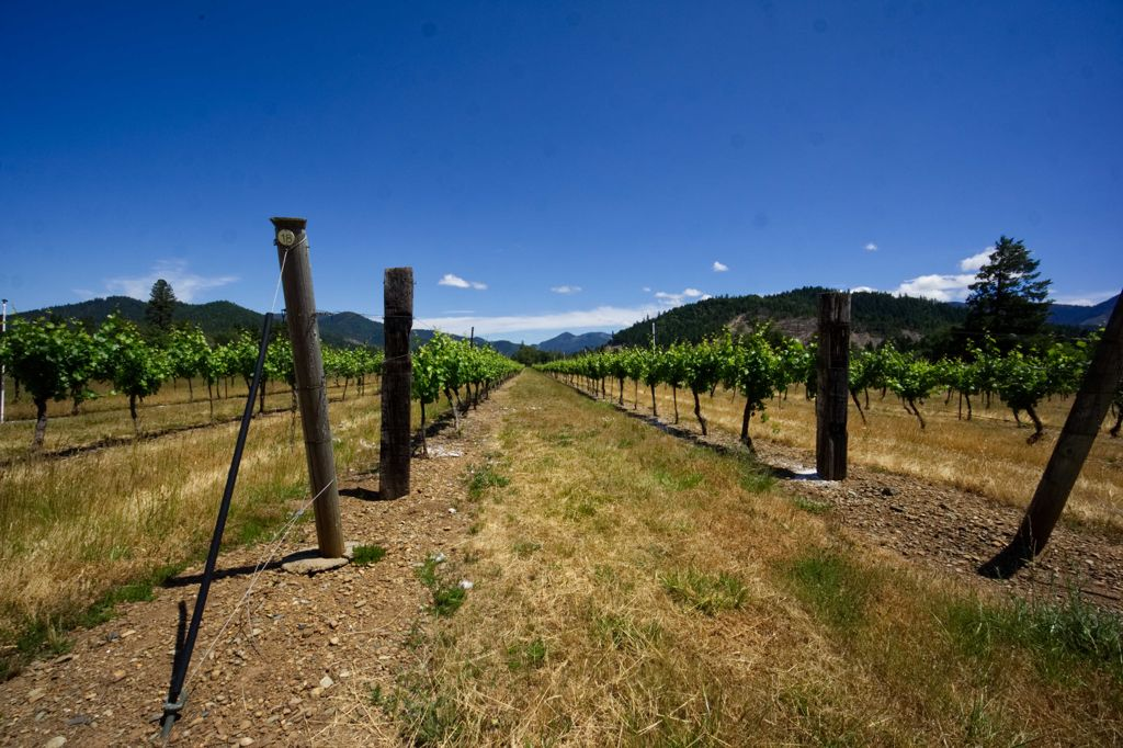 80 magnificent #acres of #ranch, #farm and #vineyard in Selma, Oregon. Watch our video tour of this great opportunity. https://t.co/69sDlBju6X