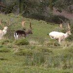 Next Wednesday we visit Berkeley Deer Park.