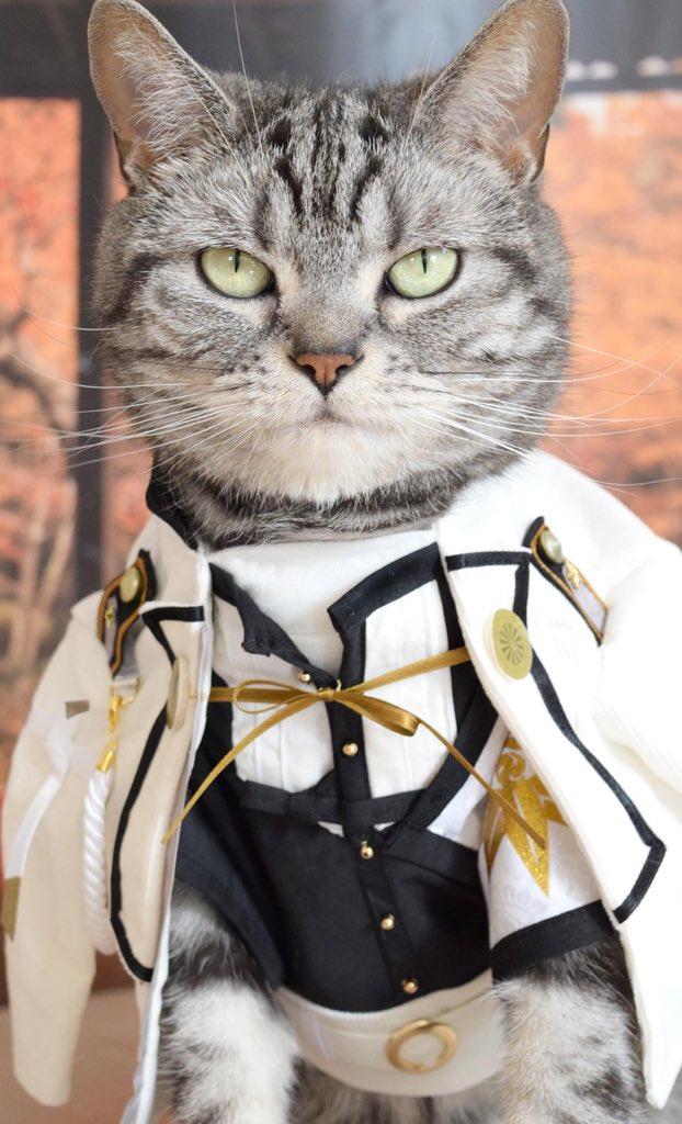 猫もコスプレしたらかなり印象変わるっていうかむしろかっこいいんだけどww