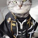 猫もコスプレしたらかなり印象変わるっていうかむしろかっこいいんだけど