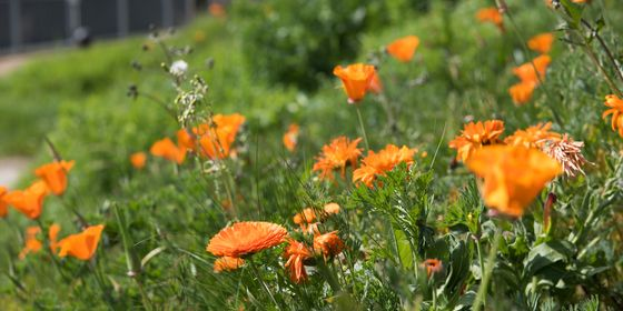 ... Gardens To Reduce The Impact Of Air Pollution, Flooding And Other  Environmental Risks. Enter Today.  Https://www.londoninbloom.co.uk/fresh Air Gardens 2/ ...